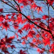 Colorful leaves — Foto de Stock