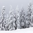 Winter Forest — Stock Photo #22194419