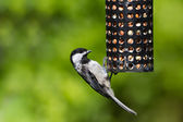 Chickadee and Bird Feeder — Stock Photo
