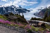 Zalm gletsjer — Stockfoto