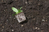 Flower Seedling — Stock Photo
