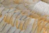 Sandhill crane feather — Stock Photo