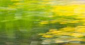 Nature background — Stock Photo