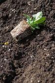 Flower Seedling — Stock Photo