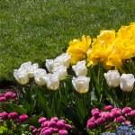 bahçe — Stok fotoğraf #33251499