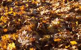 Yellowl yaprak — Stok fotoğraf