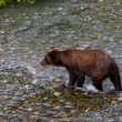 Grizzly bear — Stock Photo #33381761
