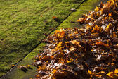 Yellow leaves and lawn — Stock Photo
