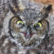 Great Horned Owl — Stock Photo #34759881