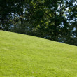Green Lawn and tree — Stock Photo #34765685