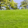 Green Lawn and tree — Stock Photo