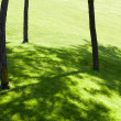 Green Lawn — Stock fotografie