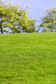 Green Lawn and tree — Foto de Stock