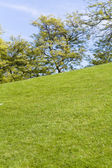 Green Lawn and tree — Foto Stock