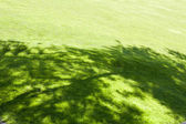 Green Lawn — Stock Photo