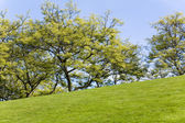 Green Lawn and tree — Stockfoto