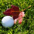 Golf Ball and Grass — Stock Photo