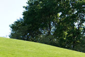 Green Lawn and tree — Stock fotografie