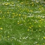 Grassy field — Stock Photo #46303995