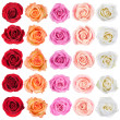 Collection of roses. — Fotografia Stock  #31325935
