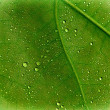Leaf with droplets — Zdjęcie stockowe #27130083