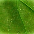 Leaf with droplets — 图库照片 #27130083
