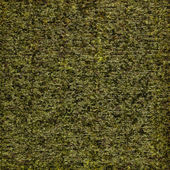 Abstract background made of algae — Stock Photo