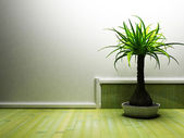 A nice palm in the dark room — Stock Photo