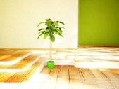 Uma planta verde no quarto — Fotografia Stock