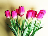 Many beautiful tulips — Stock Photo