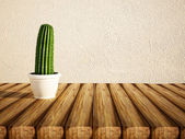 Green cactus in a vase  — Stock Photo