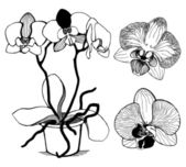 Vector set of hand drawn orchid flowers — Stock Vector
