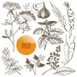 Vector set of hand drawn spices and herbs — Stock Vector #40543603