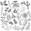 Stock vektor: Vector set of hand drawn spices and herb