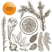 Vector set of hand drawn spices — Stock Vector