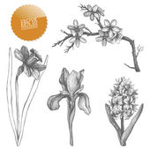 Vintage collection of vector hand drawn spring flowers isolated on white — Stock Vector