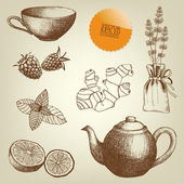 Tea time and spices — Stock Vector