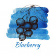 Hand drawn blueberry — Stock Vector #49796951