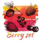Hand drawn berries — Stock Vector