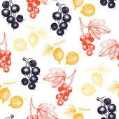 红、 黑醋栗和 glosseberry — 图库矢量图片