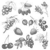 野生浆果花园. — 图库矢量图片