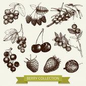 Hand drawn vintage berries — Stock Vector