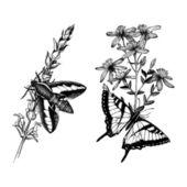 Butterflies on herbs flowers — Stock Vector