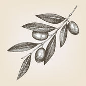 Olive twig — Vector de stock