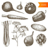 Vintage healthy food — Stock Vector