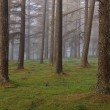 European larch forest — Stock Photo #26302775