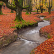 Fall in the forest — Stockfoto