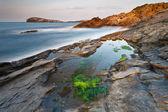 Green algae — Stock Photo