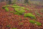 Autumn season in the forest — Stock Photo