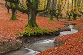 Fall in the forest — Stock Photo